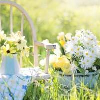Ważne elementy ogrodu – twój poradnik na wiosnę