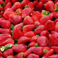 Czym się kierować przy wyborze sadzonek truskawek?